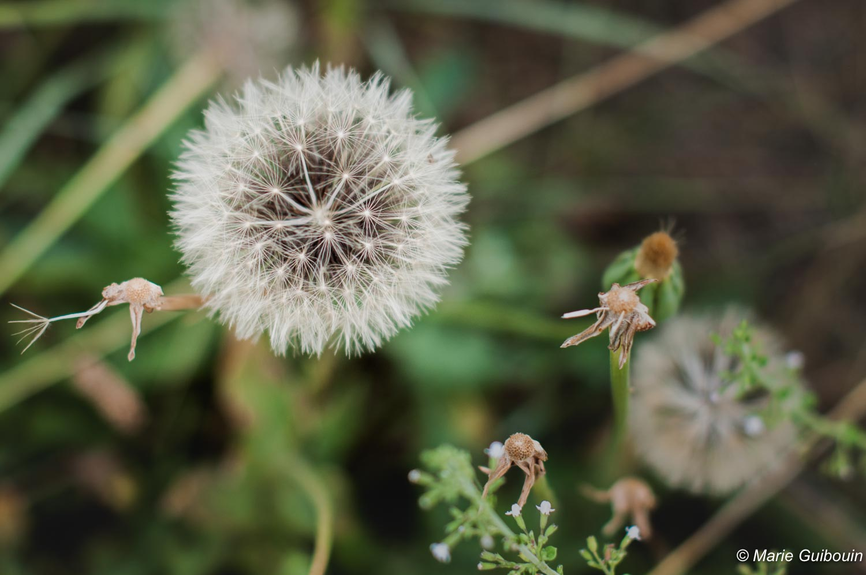 Contente-toi de semer des graines