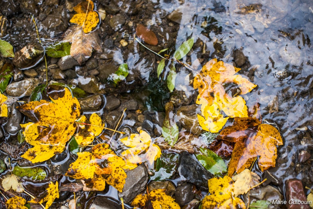 feuilles d'automne dans l'eau