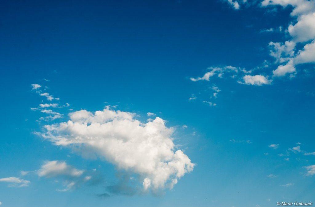 Défi Nature Jour 20 : la tête dans les nuages