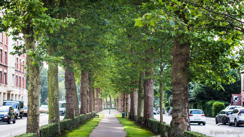 Défi nature jour 6 : la symphonie des arbres